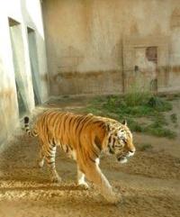 2008-zoo-do