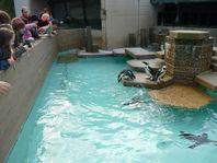 2008-zoo-fr